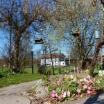 Die Frühlingsboten - Primeln und Schneerosen