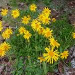 ... über die Blütenpracht staunen