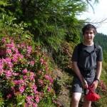 ... üppig blühen die Alpenrosen