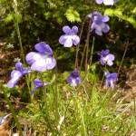 immer wieder farbenprächtige Blumen
